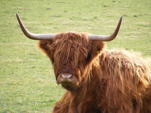 highland-2165_640